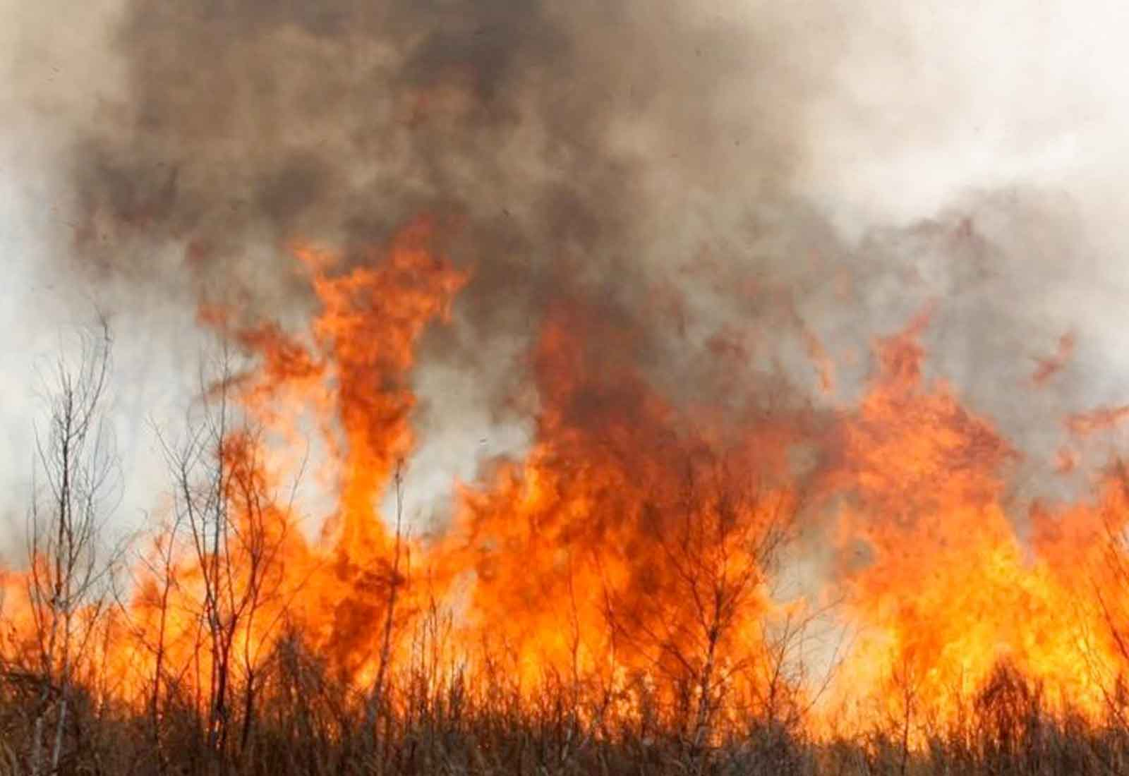 Media Release: Bush Fires Deadly For Lungs
