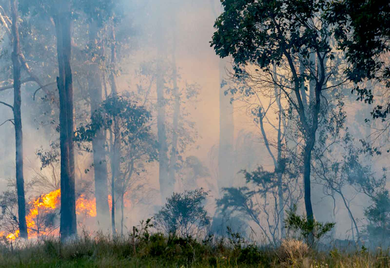 "Harms from bushfire smoke: ""yesterday was the time to talk about it"""